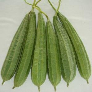 bari-jhinga-1